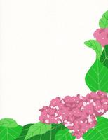 ピンク紫陽花 02650000071| 写真素材・ストックフォト・画像・イラスト素材|アマナイメージズ