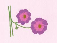 ピンクの花 02650000097| 写真素材・ストックフォト・画像・イラスト素材|アマナイメージズ