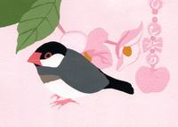 桜文鳥 02650000111| 写真素材・ストックフォト・画像・イラスト素材|アマナイメージズ