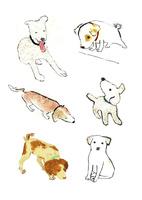 犬 02653000031| 写真素材・ストックフォト・画像・イラスト素材|アマナイメージズ