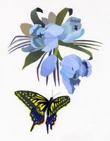 花と蝶 02655000255| 写真素材・ストックフォト・画像・イラスト素材|アマナイメージズ