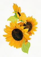ひまわり 02655000328| 写真素材・ストックフォト・画像・イラスト素材|アマナイメージズ