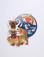 化粧まわしを付けた闘犬土佐犬と富士山の日の出 02657000032| 写真素材・ストックフォト・画像・イラスト素材|アマナイメージズ