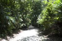 ティカル遺跡 ジャングルの中の一本道
