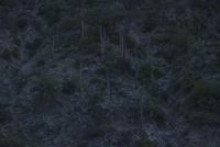サボテン 荒野