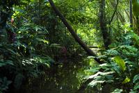 パレンケ ジャングルの緑 02667000574  写真素材・ストックフォト・画像・イラスト素材 アマナイメージズ