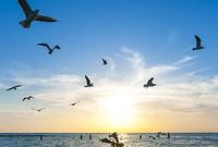 海辺の夕日と飛ぶ鳥  02667000649| 写真素材・ストックフォト・画像・イラスト素材|アマナイメージズ
