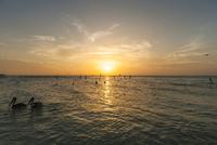 鳥たちの夕暮れ 02667000653  写真素材・ストックフォト・画像・イラスト素材 アマナイメージズ