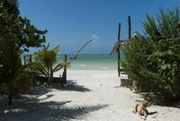 ビーチへ続く道と犬 02667000662  写真素材・ストックフォト・画像・イラスト素材 アマナイメージズ