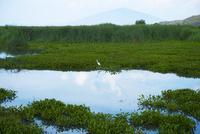 メキシコ ユリリア 湖のリフレクションと水鳥 02667000803  写真素材・ストックフォト・画像・イラスト素材 アマナイメージズ
