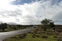 エクスムーア国立公園 道路と車 犬を散歩させる人 02667000935  写真素材・ストックフォト・画像・イラスト素材 アマナイメージズ