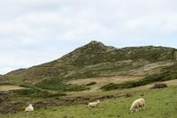 草原の羊たち 02667000998| 写真素材・ストックフォト・画像・イラスト素材|アマナイメージズ