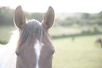 馬のアップ 02667001143  写真素材・ストックフォト・画像・イラスト素材 アマナイメージズ