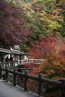 紅葉の箕面大滝への道