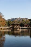奈良公園 鷺池 紅葉と浮見堂 02667001663  写真素材・ストックフォト・画像・イラスト素材 アマナイメージズ