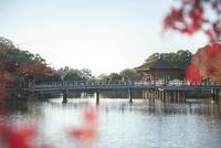 奈良公園 鷺池 紅葉と浮見堂 02667001666  写真素材・ストックフォト・画像・イラスト素材 アマナイメージズ