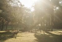 奈良公園 鹿と光 02667001670  写真素材・ストックフォト・画像・イラスト素材 アマナイメージズ