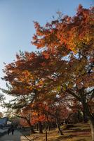 奈良公園 紅葉の道