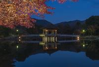奈良公園  鷺池 ライトアップされた浮見堂と紅葉 02667001697  写真素材・ストックフォト・画像・イラスト素材 アマナイメージズ