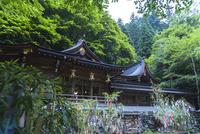 貴船神社と七夕の飾り 02667001991| 写真素材・ストックフォト・画像・イラスト素材|アマナイメージズ