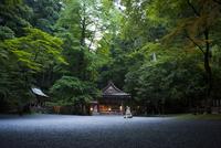 貴船神社 新緑の奥の院