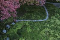 瑠璃光院  苔と紅葉 02667002220| 写真素材・ストックフォト・画像・イラスト素材|アマナイメージズ