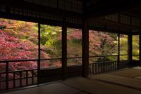 紅葉の瑠璃光院  2階からの瑠璃の庭の眺め 02667002252  写真素材・ストックフォト・画像・イラスト素材 アマナイメージズ