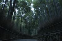 嵐山 竹林 02667002350| 写真素材・ストックフォト・画像・イラスト素材|アマナイメージズ
