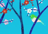 梅と鶯 02671000074| 写真素材・ストックフォト・画像・イラスト素材|アマナイメージズ