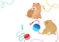 のほほん柴犬 02671000151| 写真素材・ストックフォト・画像・イラスト素材|アマナイメージズ