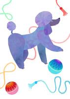 るんるんプードル 02671000162| 写真素材・ストックフォト・画像・イラスト素材|アマナイメージズ