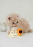 お花とスコテッシュフォールドの子猫