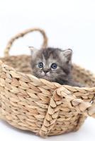 かご猫ミヌエット1