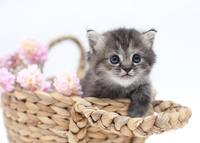 かご猫ミヌエット2