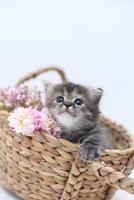 かご猫ミヌエット5