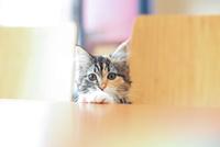 ノルウェージャン 02673001189  写真素材・ストックフォト・画像・イラスト素材 アマナイメージズ