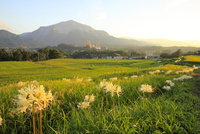 武甲山と曼珠沙華