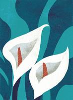 水芭蕉の花 02679000103| 写真素材・ストックフォト・画像・イラスト素材|アマナイメージズ