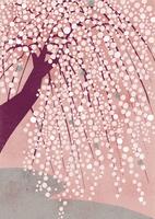 しだれ桜 02679000107| 写真素材・ストックフォト・画像・イラスト素材|アマナイメージズ