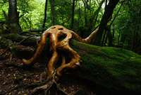 苔の森と奇妙な木