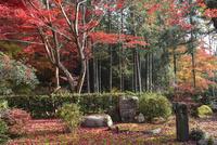 教林坊境内の紅葉 02698000084  写真素材・ストックフォト・画像・イラスト素材 アマナイメージズ