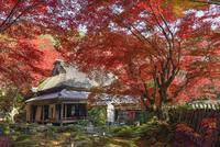 教林坊書院と庭園の紅葉 02698000085  写真素材・ストックフォト・画像・イラスト素材 アマナイメージズ
