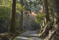 古知谷阿弥陀寺へ続く山道 02698000108  写真素材・ストックフォト・画像・イラスト素材 アマナイメージズ