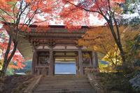 西明寺二天門と紅葉 02698000109  写真素材・ストックフォト・画像・イラスト素材 アマナイメージズ