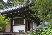 浄瑠璃寺本堂とアジサイ