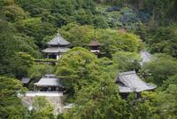 善峯寺全景とアジサイ苑