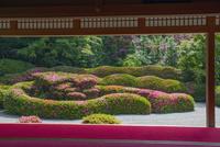 大池寺蓬莱庭園とサツキ