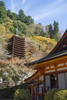 紅葉の談山神社,十三重塔と本堂 02698000173  写真素材・ストックフォト・画像・イラスト素材 アマナイメージズ
