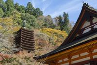 紅葉の談山神社,十三重塔と本堂 02698000174  写真素材・ストックフォト・画像・イラスト素材 アマナイメージズ