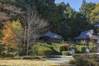 奈良,大願寺境内と紅葉 02698000175  写真素材・ストックフォト・画像・イラスト素材 アマナイメージズ